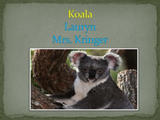 Koala Lauryn Mrs.  Kringer