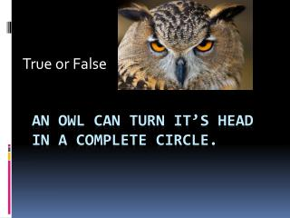 An owl can turn it's head in a complete circle.