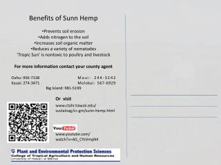 Benefits of  Sunn  Hemp Prevents soil erosion Adds nitrogen to the soil