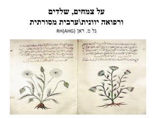 על צמחים, שלדים  ורפואה  יוונית\ערבית  מסורתית גל מ. ראן  RH(AHG)