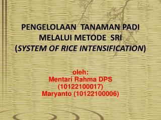PENGELOLAAN  TANAMAN PADI MELALUI METODE  SRI ( SYSTEM  OF RICE INTENSIFICATION )