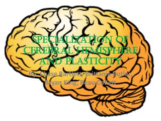 Specialization of Cerebral Hemisphere and Plasticity