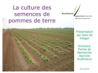 La culture des semences de pommes de terre
