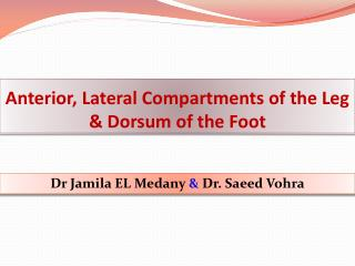 Anterior, Lateral Compartments of the Leg  & Dorsum of the Foot