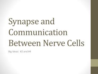 Synapse and Communication Between Nerve Cells