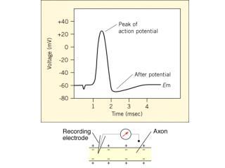 Doyle et al.,   Science  1998; 280: 69