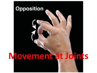 Movement at Joints