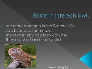 Eastern screech owl .