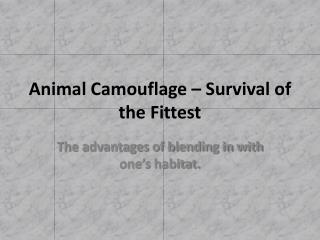 Animal Camouflage – Survival of the Fittest