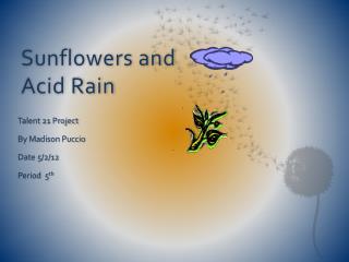 Sunflowers and Acid Rain