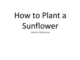 How to Plant a Sunflower