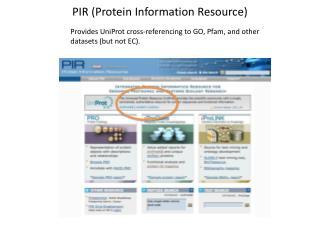 PIR (Protein Information Resource)