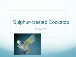 Sulphur - crested Cockatoo