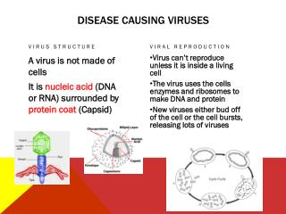 Disease causing viruses