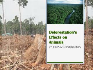 Deforestation's Effects on Animals
