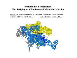 Bacterial RNA Polymerase  New Insights on a Fundamental Molecular Machine