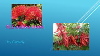 N .Z native trees