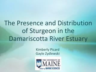 The Presence and Distribution of Sturgeon in the Damariscotta River Estuary