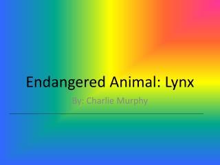 Endangered Animal: Lynx