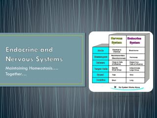 Endocrine and Nervous Systems