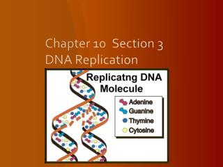 Chapter 10	Section 3   DNA Replication