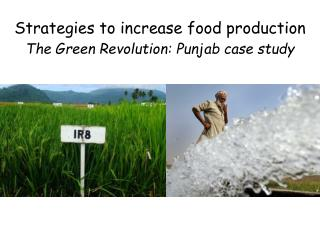 Strategies to increase food production The Green Revolution: Punjab case study