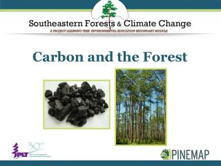 Carbon and the Forest