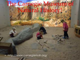 The Carnegie Museum of Natural History!