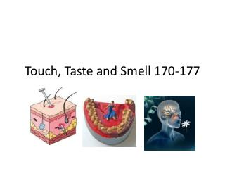Touch, Taste and Smell 170-177