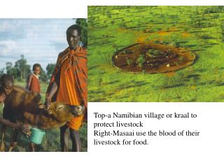 Top-a Namibian village or kraal to protect livestock
