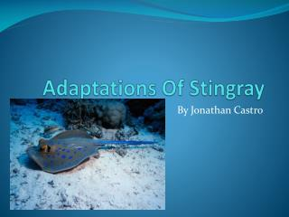Adaptations Of Stingray
