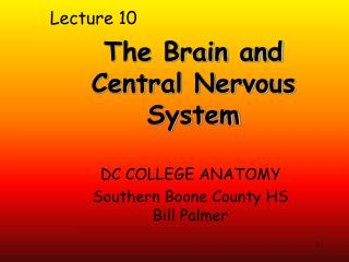 The  Brain and Central  Nervous  System