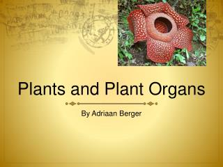 Plants and Plant Organs