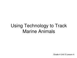 Using Technology to Track Marine Animals