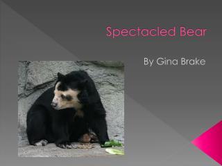P Spektcld  Bear Spectacled Bear