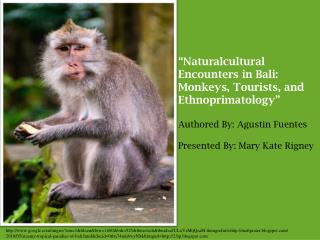 """Naturalcultural Encounters in Bali: Monkeys, Tourists, and Ethnoprimatology"""