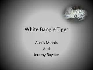 White Bangle Tiger