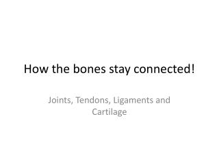 How the bones stay connected!