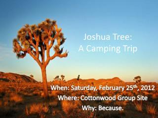Joshua Tree:  A Camping Trip