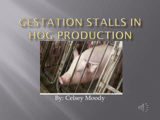 Gestation Stalls in Hog Production