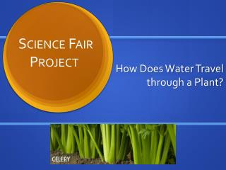 How Does Water Travel through a Plant?