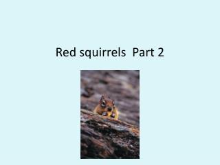 Red squirrels  Part 2