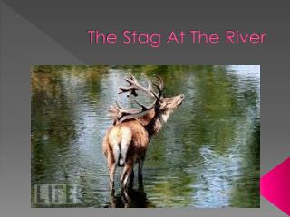 The Stag At The River