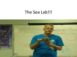 The Sea Lab!!!