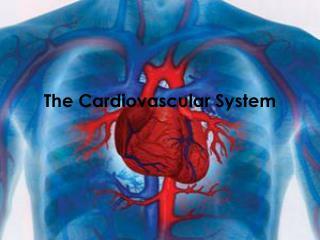 The  C ardiovascular System