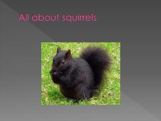 All about squirrels