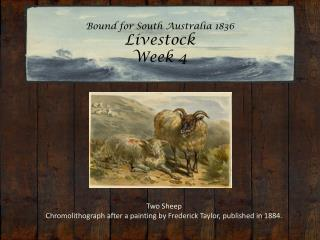Bound for South Australia 1836 Livestock Week 4