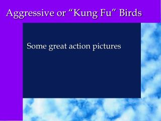"Aggressive or ""Kung Fu"" Birds"