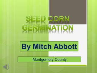 Seed corn germination