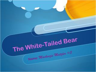 The White-Tailed Bear